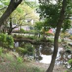 柏の宮公園の池