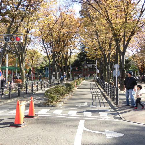 ケヤキ並木が美しいメインストリート