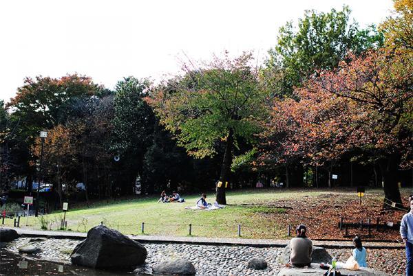 ピクニックにぴったりな芝生の丘