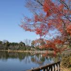 穏やかな時間が流れる上の池