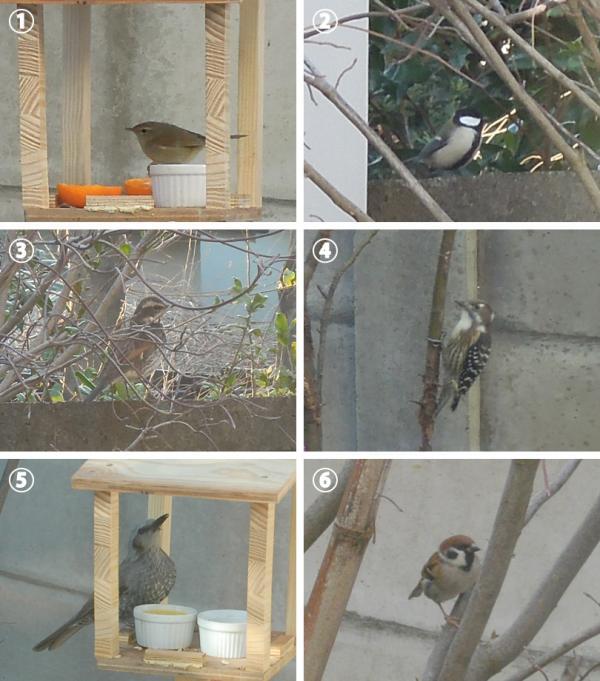 庭に来る野鳥の例<br>(1)ウグイス<br>(2)シジュウカラ<br>(3)ツグミ<br>(4)コゲラ<br>(5)ヒヨドリ<br>(6)スズメ