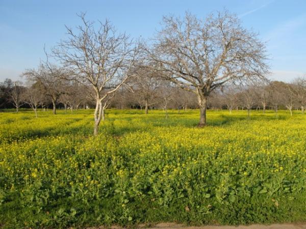 現地農園(写真提供:山下さん)