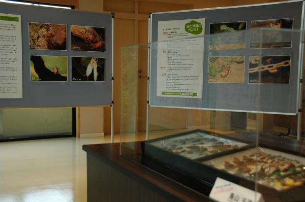 平成20年度の区民参加型展示「杉並のセミ・ミーンミーン展」