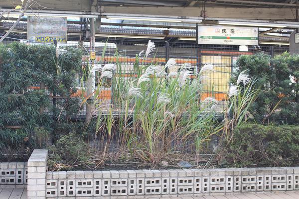 荻窪駅北口ロータリーにある荻