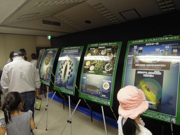 久我山会館では昼間からホタル観賞ができるほか、ホタルの生態について学べるパネルも展示