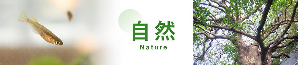 自然の画像